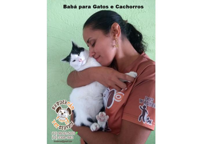 Babá para gatos – animal estimação são josé dos