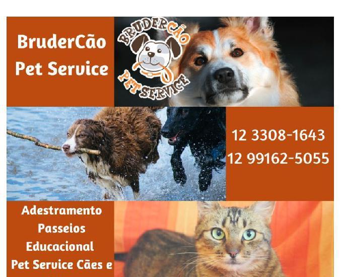 Cuidadores de cachorros – animal estimação sjc
