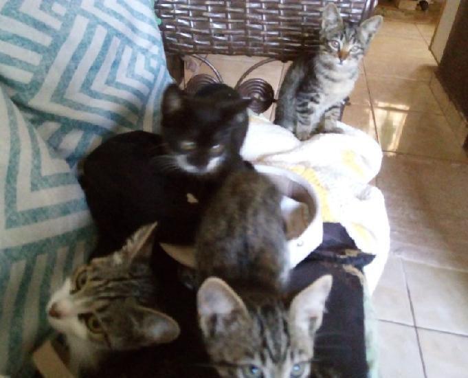 Doação lindos gatos doceis