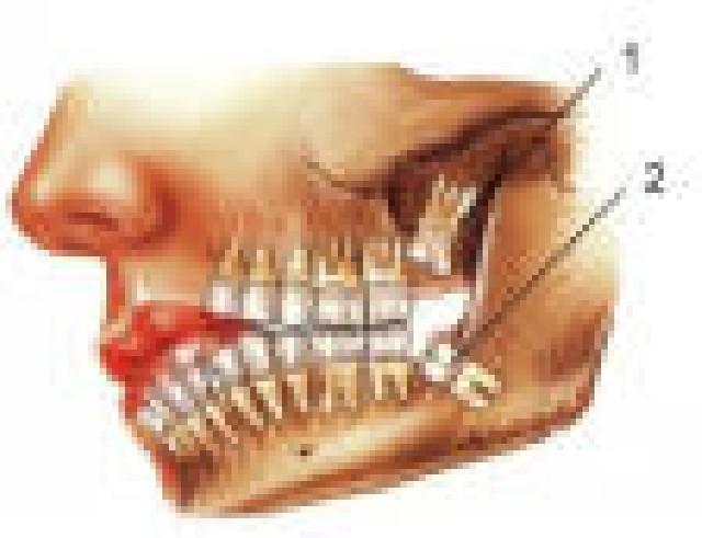 Estágio para estudante de odontologia
