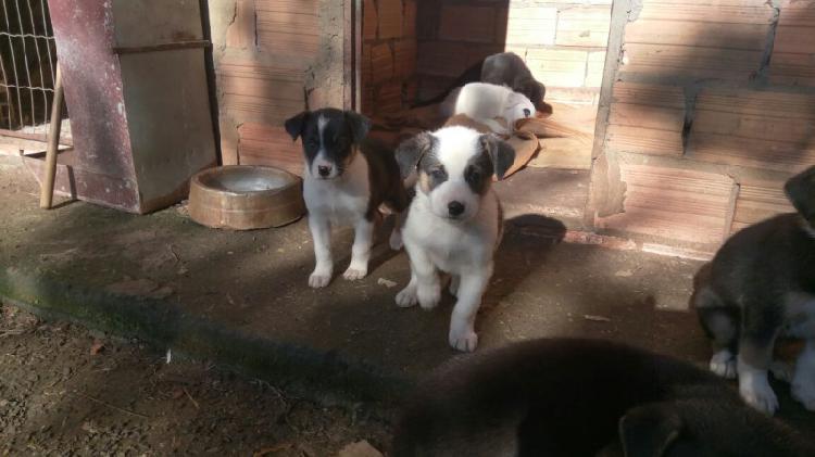 Filhotes cachorro - doação