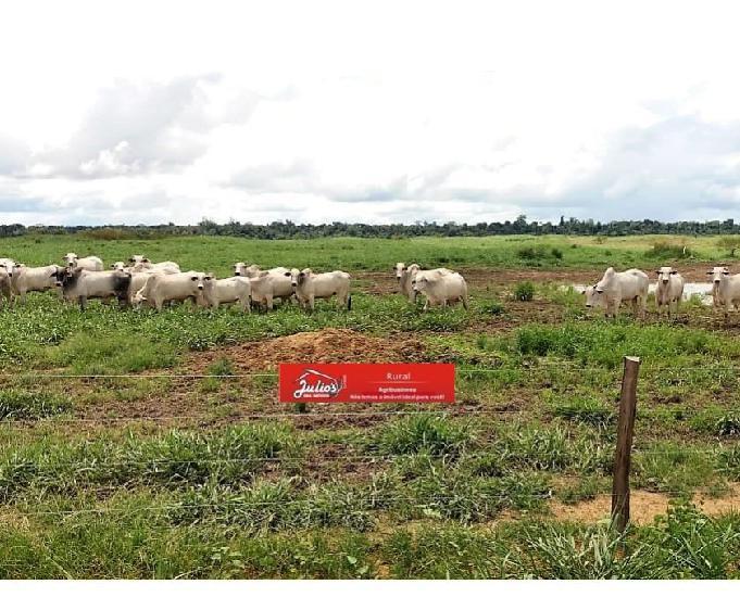 Fazenda no pará em paragominas com plantio de soja e gado