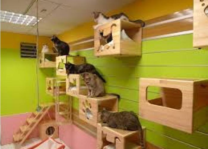 Hotel e creche para cães e gatos em sp