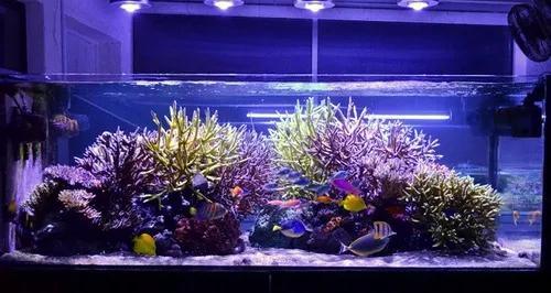 Kit completo lâmpada barra tubo led aquário peixes