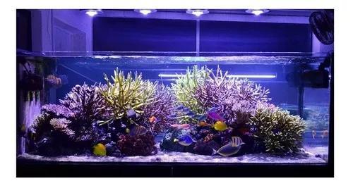 Kit luminária 60cm barra tubo led iluminação aquário