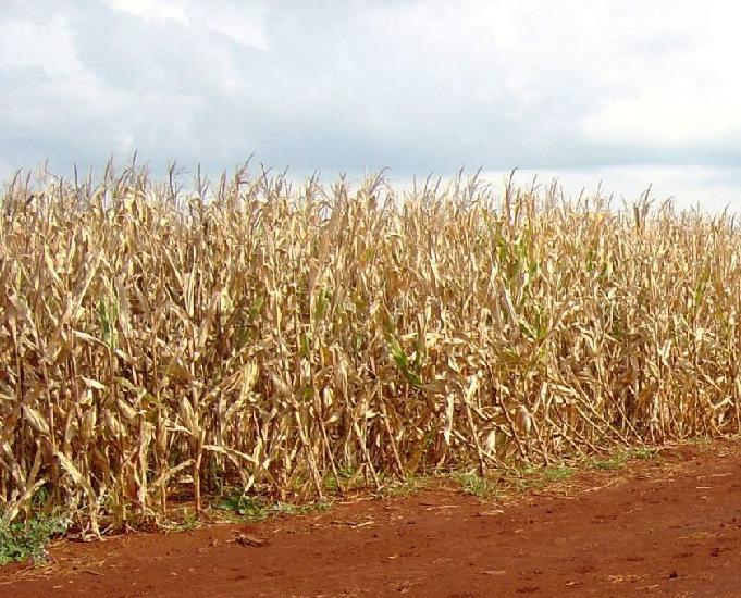 Oportunidade de fazendão de soja em goioere paraná
