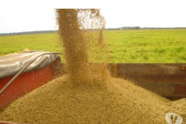 Vende-se granja agropecuária e industria modelo 25 mil.