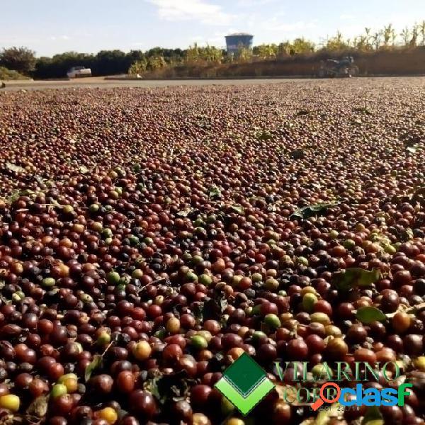 Fazenda em córrego danta cafezal formado