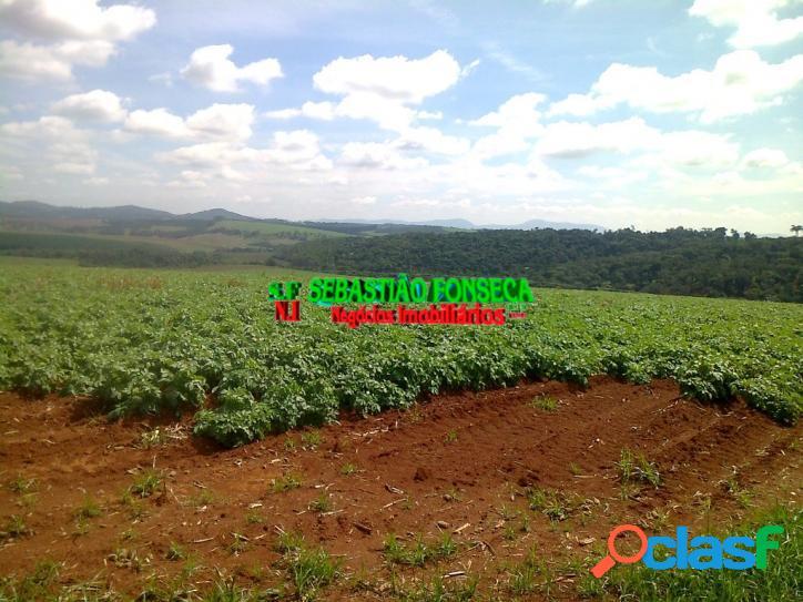 fazenda muito produtiva em minas Gerais - Investimento 1