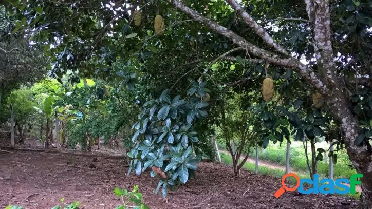 Chácara com pomar em paraibuna