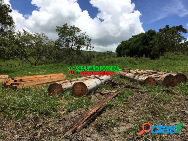 Fazenda para criação de gado vale do paraíba