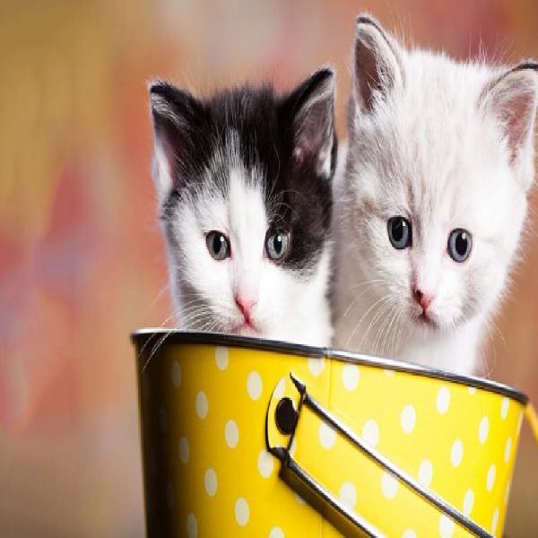 Alimentação natural precisa para gatos saudáveis