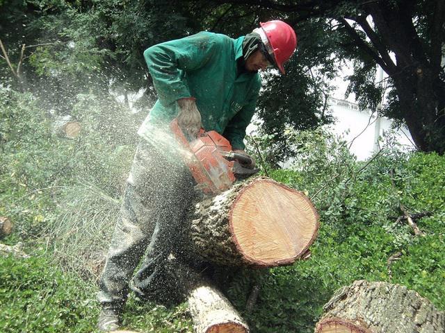 Extração e poda de árvores   região de campinas