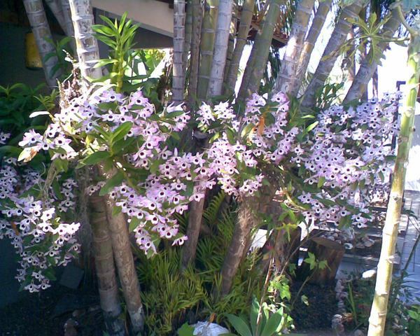 Jardim | sanfer - adubo liquido - ortflores&plantas -