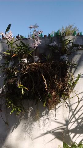 Jardins | sanfer | varandas algumas opções para decorar o