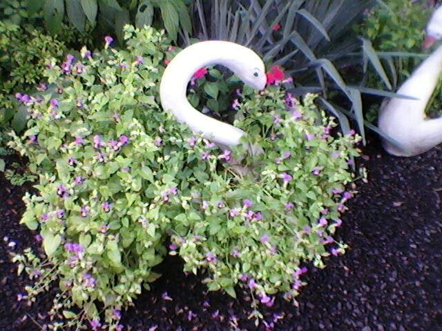 Vasos para jardim sanfer londrina - anuncios de empresas,