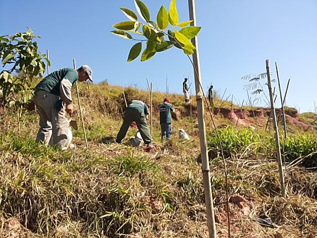 Compensação ambiental zap 11-98621-3420