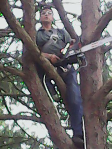 Remoção de árvores zap 11-98621-3420