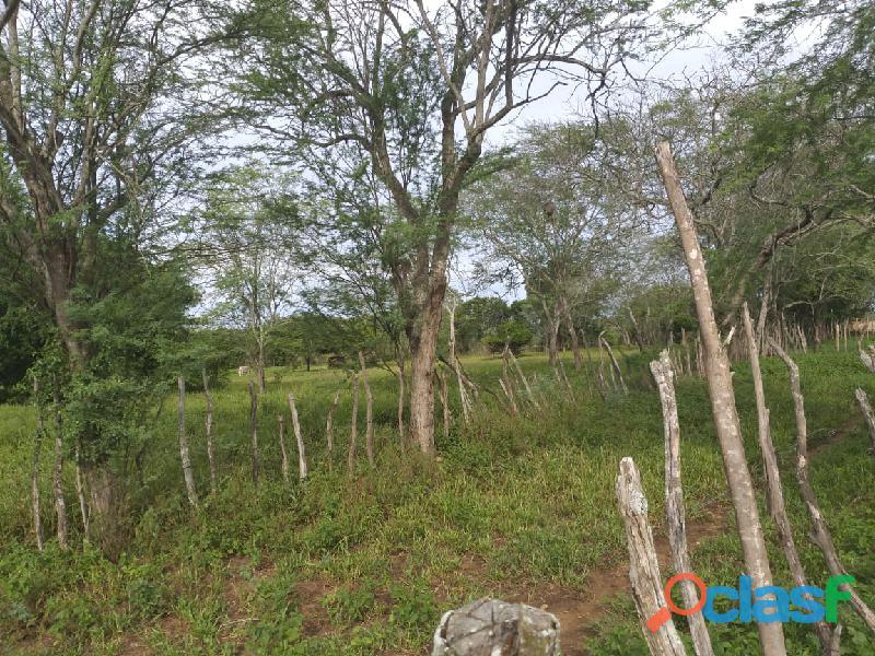 Propriedade de 31 hectares, com casa sede, em Apoti PE 12