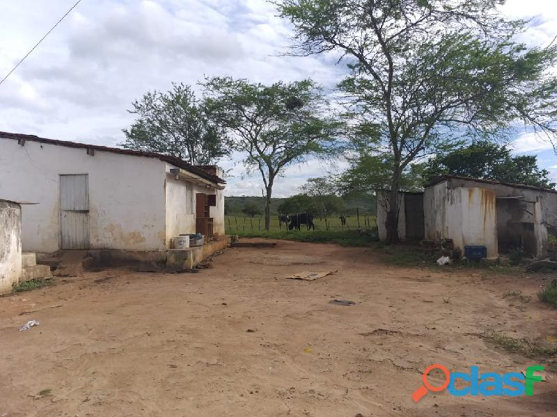 Propriedade de 31 hectares, com casa sede, em Apoti PE 13