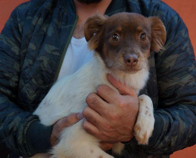 Tarsila, uma cachorrinha porte pequeno a procura de um lar