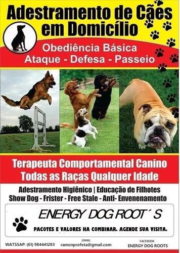 Adestramento canino. agende sua visita para educar seu pet.