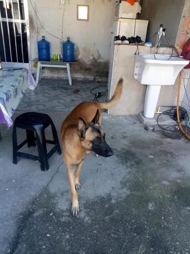 Cão pra adoção