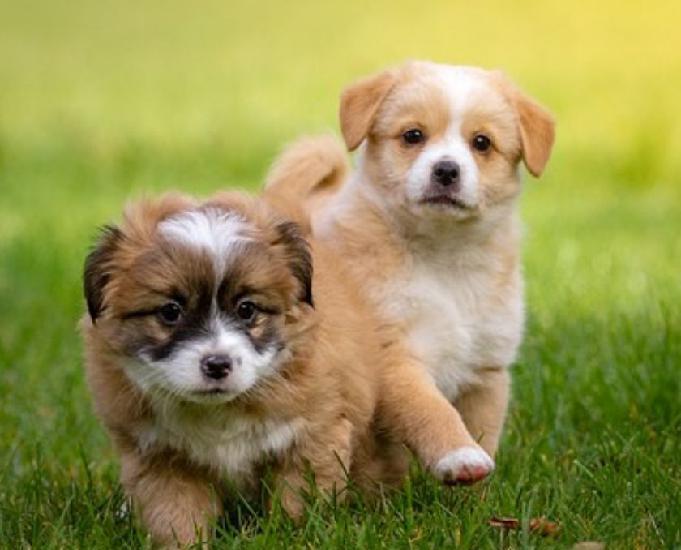 Cachorro & cia
