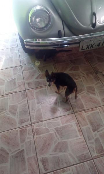 Cachorro Rua Animais Janeiro Clasf