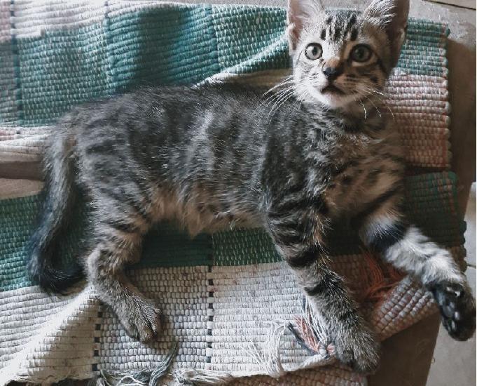 Doação filhote de gato (macho)