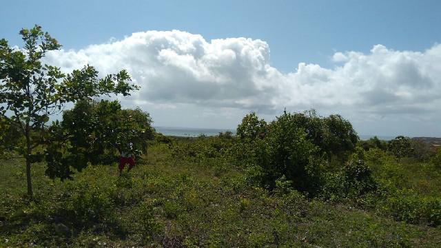 Terrenos com vista para o mar