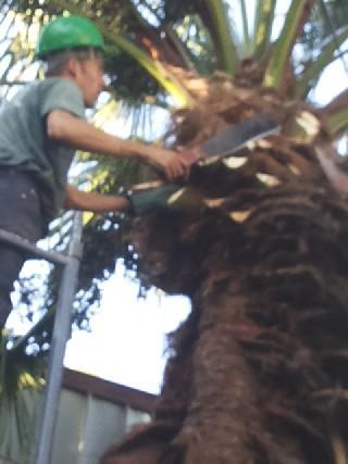 Corte de árvores em guarulhos