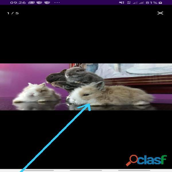Porquinhos da Índia e coelhos 1