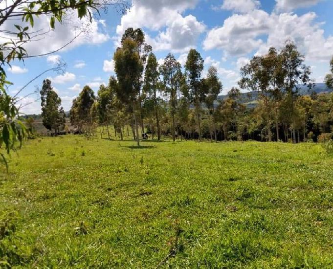 Fazenda - sul de minas - pcultivo e gado - acessível,