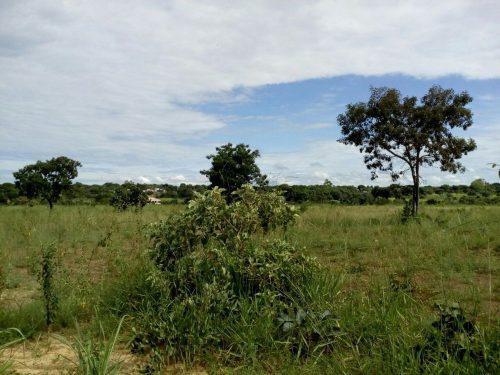 Taboquinha-go linda chácara 5.000m2 ótima localização