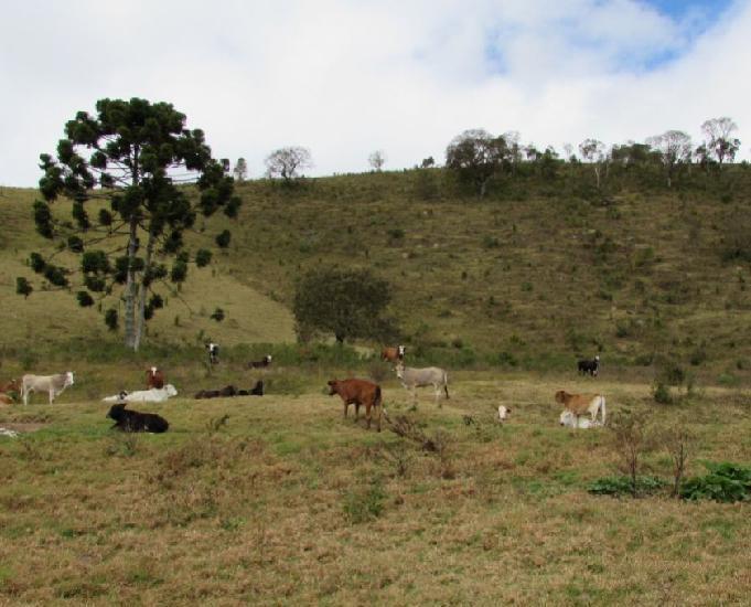 Fazenda na regiao de extrema mg a 35 km