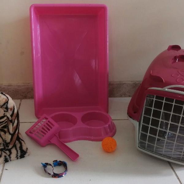Kit gato completo com arranhador