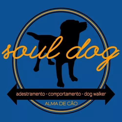 Adestramento, comportamento, dog walker