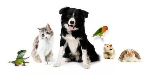 Babá de animais de estimação