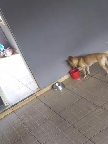 Doa-se cachorro vira lata