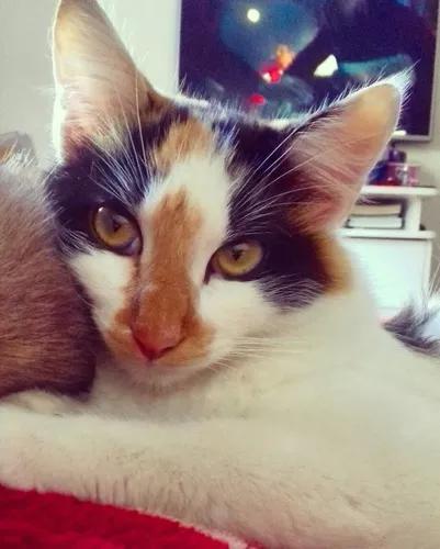 Doação gatos