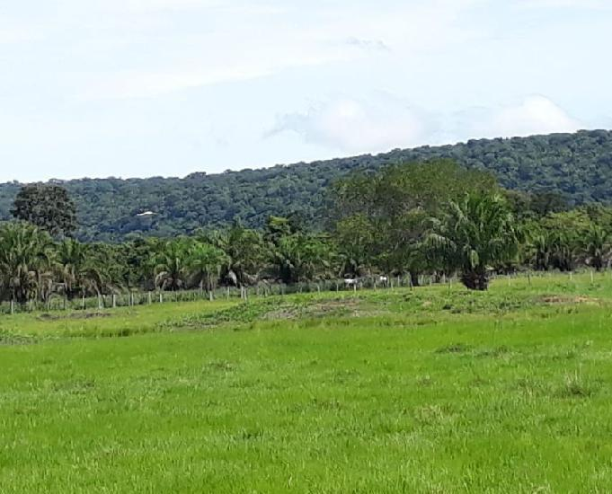 Sitio em mimoso 40 hectares