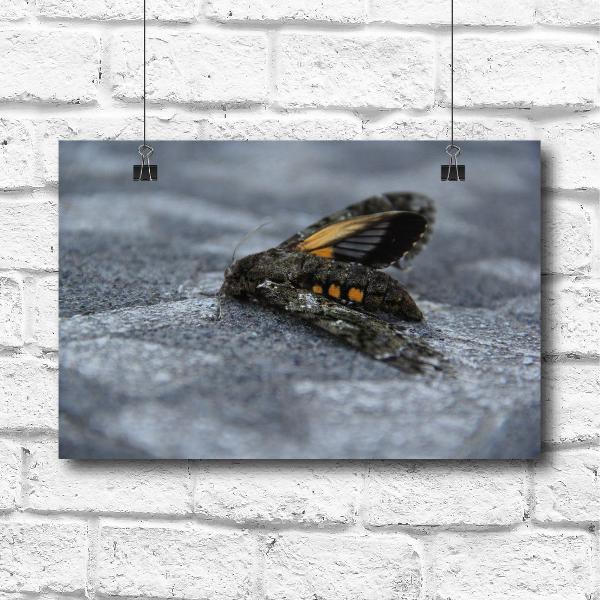 Pôster borboleta caída ao chão - 40cm x 30cm