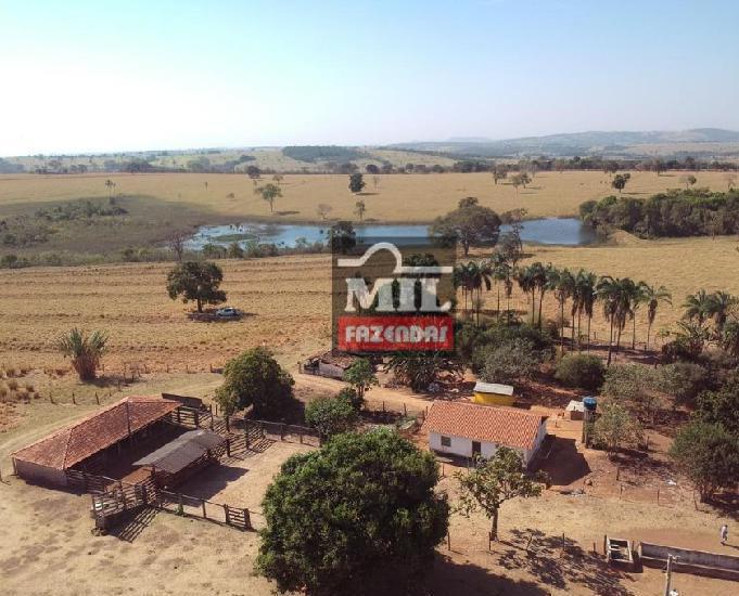 Fazendinha 11.5 alqueires (55.66 hectares) jandaia-go