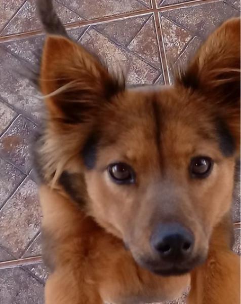 Ajuda para encontrar cão desaparecido