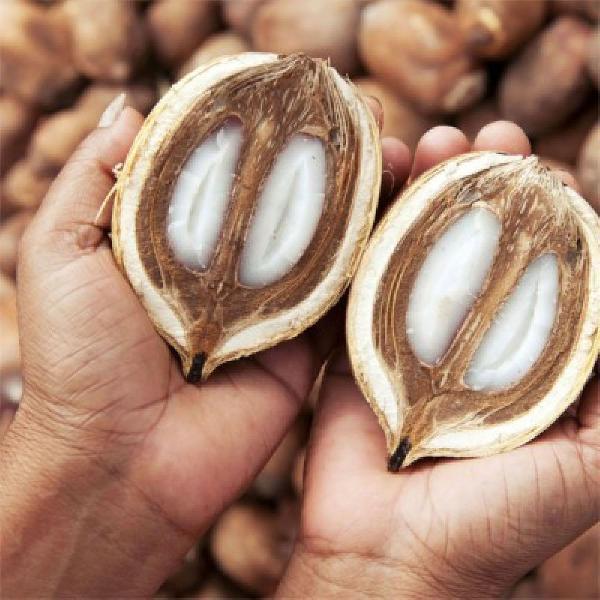 Leo de coco de babaçu 100 ml