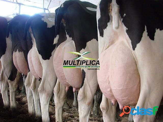 Fazenda em araguari mg - 26,62 hectares - 5,5 alqueires café