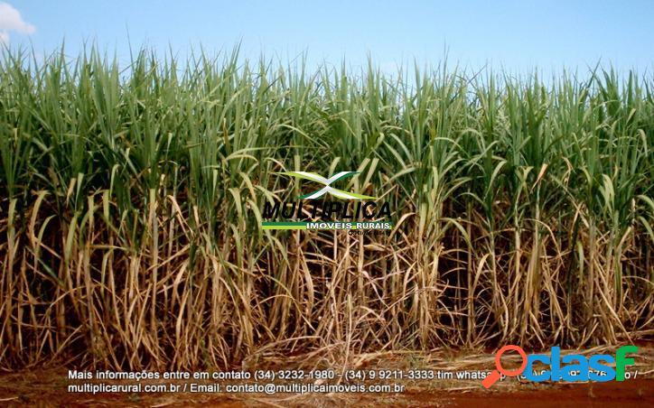 Fazenda ituiutaba 261,36 ha 54 alq agricultura cana usina