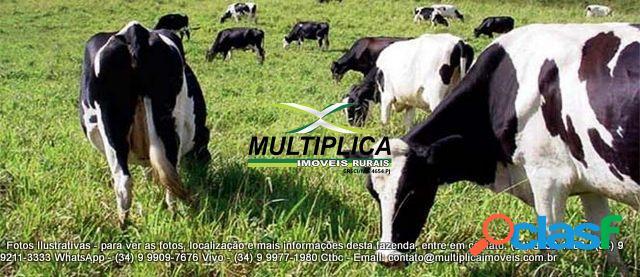 Fazenda uberlândia mg - 106,48 hectares - 22 alqueires