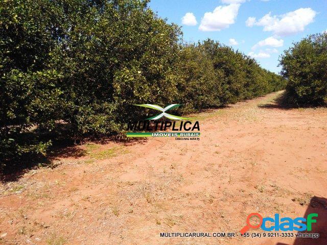 Sítio uberlândia 26,18 ha 5,41 alq agricultura